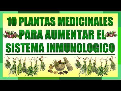 10 Plantas Medicinales Que Ayudan A Aumentar Tu Sistema Inmunologico Sistema Inmunologico Plantas Medicinales Plantas
