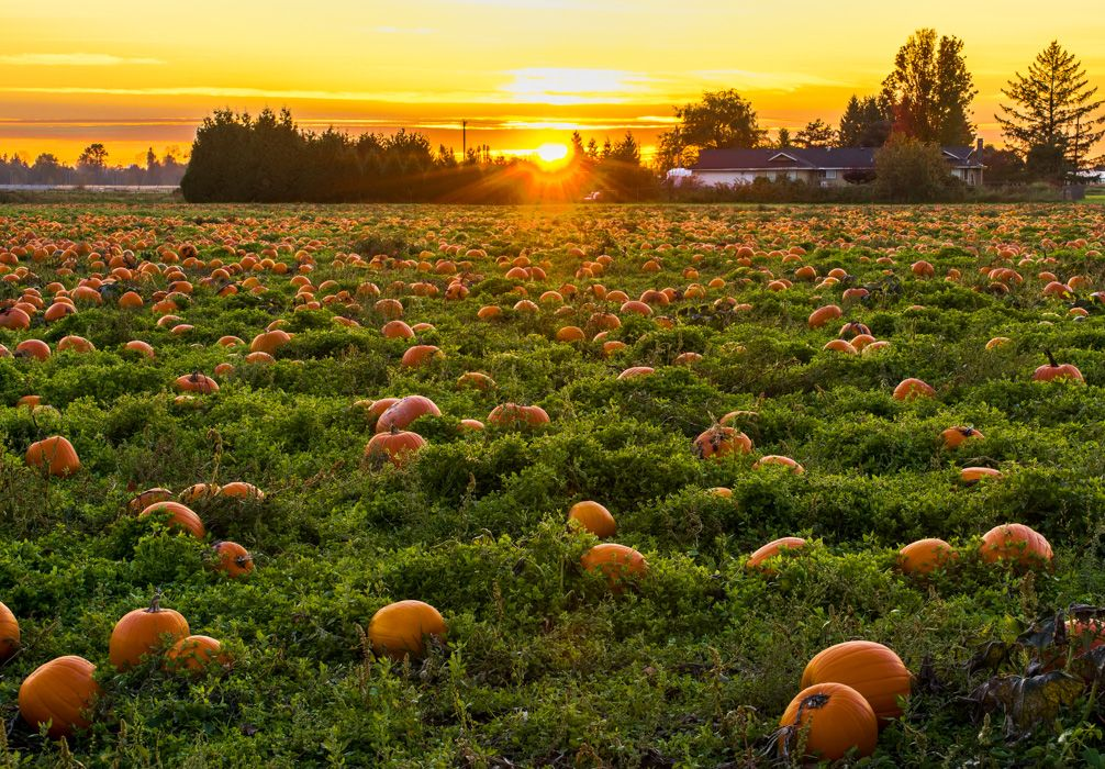 Pumpkin Patch (With images) Fall planting guide, Fall