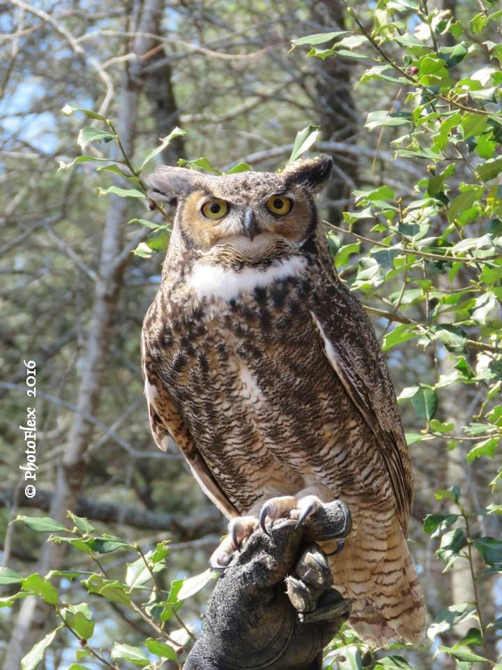 """A wise old owl sat on an oak. The more he saw the less he ..."