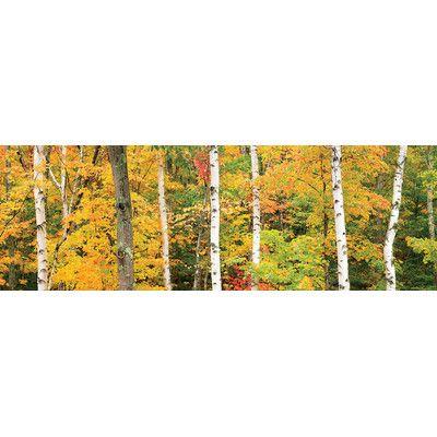Alcott Hill Autumn Forest Landscape Photographic Print on Wrapped Canvas Size: