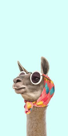 CASETiFY iPhone XS Case - FASHION LAMA by Paul Fuentes