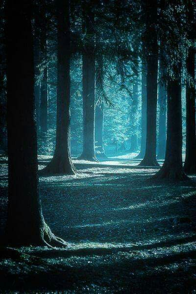 Creamy moonlight pours down on a ℒℴvℯly forest...