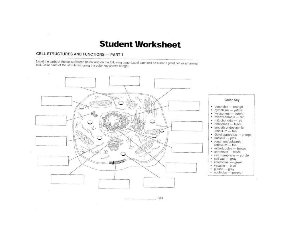 Cells Alive Worksheet Answers Diagram Animal Cell to Label
