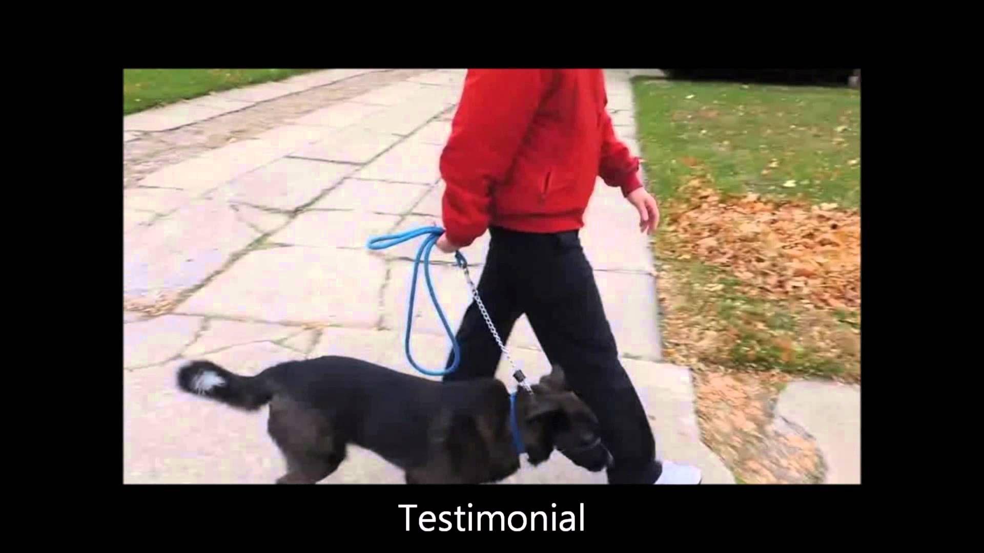 Safecalm Dog Training Collar Real Customer Reviews Dog Whisperer