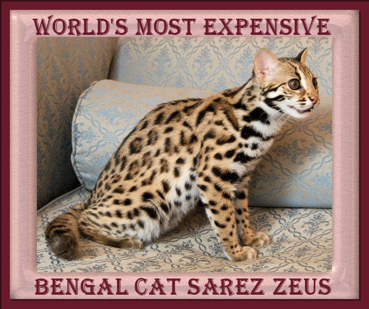 Look At The Exquisite Markings And The Wild Look Of The Face Of