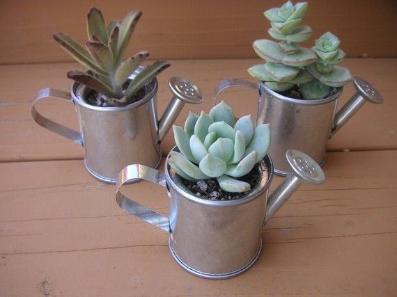 Watering Cans With Succulent Plants