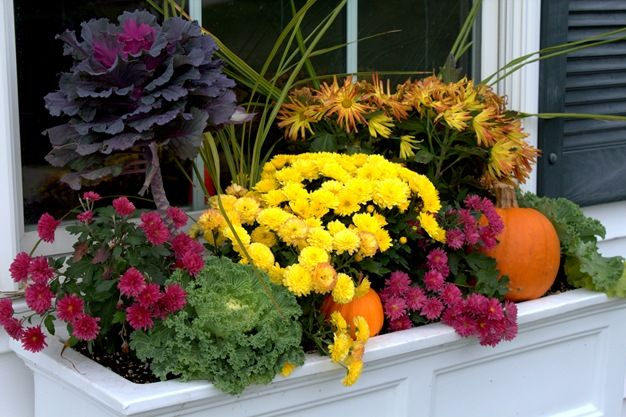 10 Fall Plants Flowers That Will Spice Up Your Window Boxes Hooks Lattice Blog In 2020 Window Box Flowers Fall Flower Boxes Fall Windows