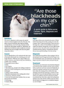 Client Handout Are Those Blackheads On My Cat S Chin Feline