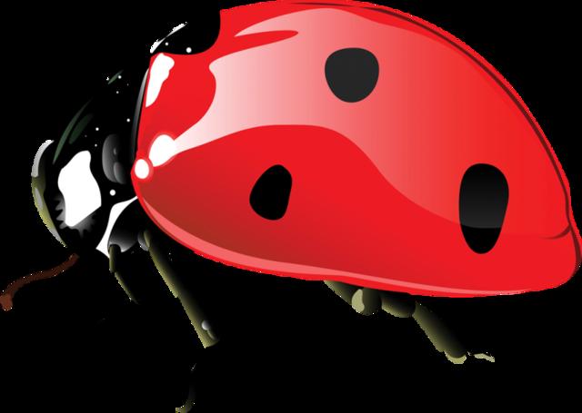 Sevimli Uğur Böcekleri, PNG Ladybug Pictures