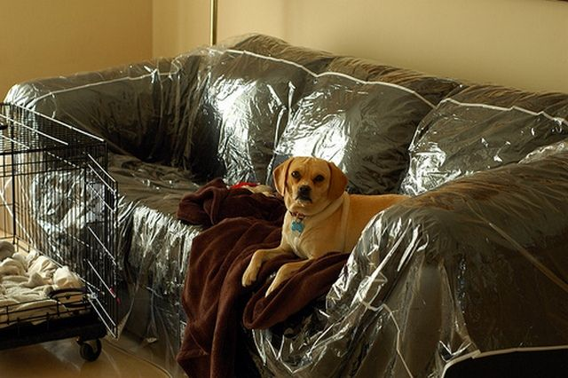 Plastic Couch Cover For Pets Couch Covers Sofa Covers Sofa