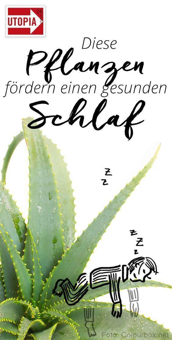 4 Zimmerpflanzen, die gesunden Schlaf fördern  Pflanzen im Schlafzimmer können einen gesunden Schlaf fördern – oder ihn hemmen. Wir zeigen dir #die #fördern #gesunden #Schlaf #zimmerpflanzen #pflegeleichtepflanzen