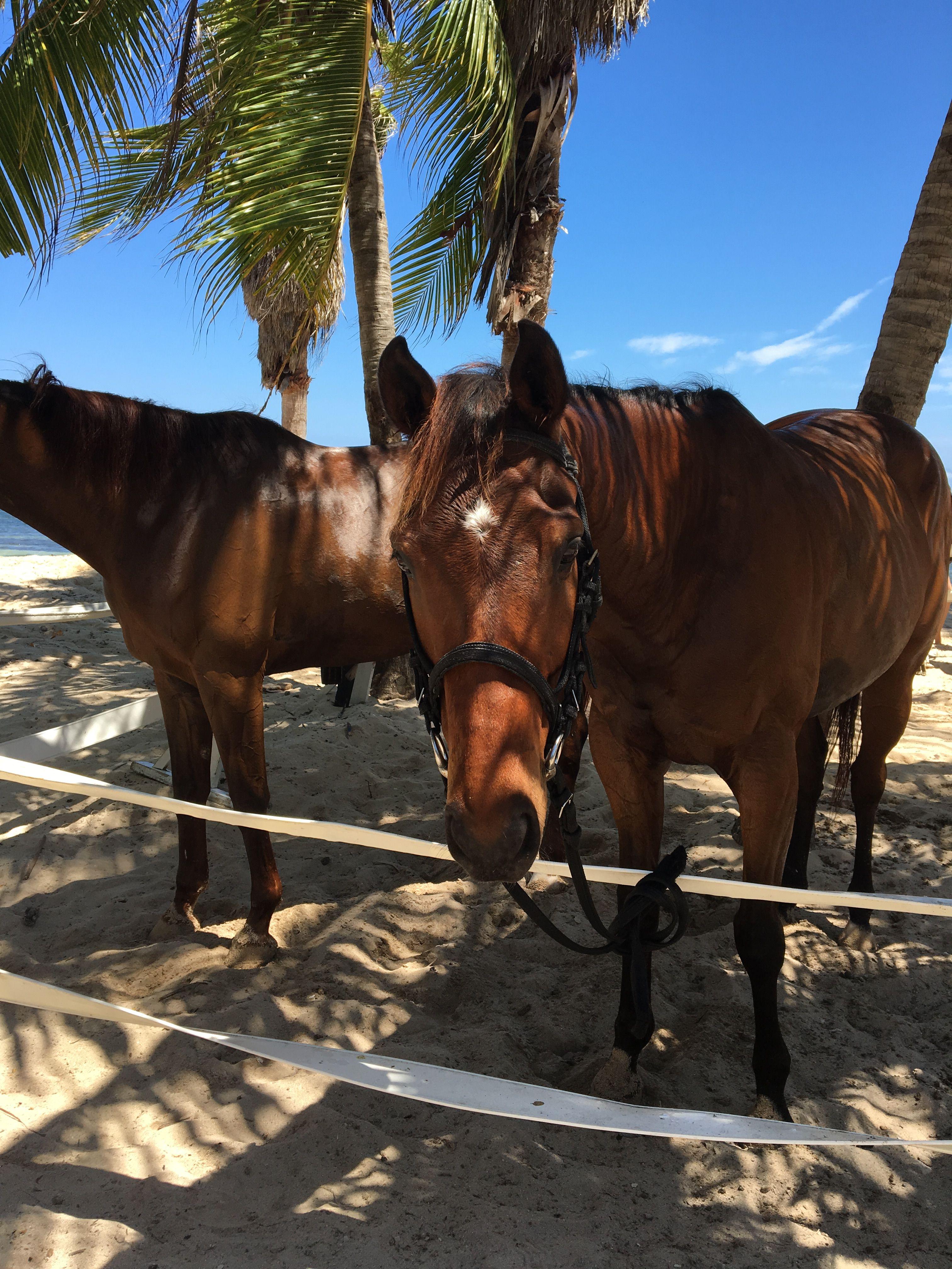 Het bezit van een oud paard is leuk! - ehorses Magazine