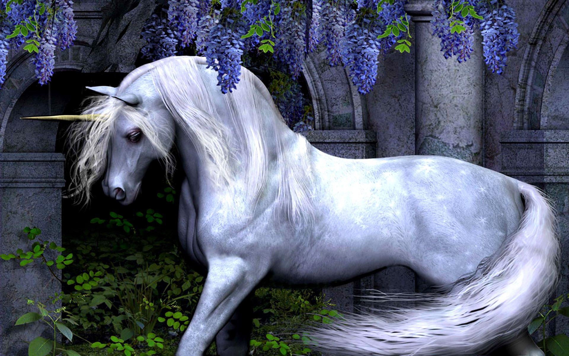 Best Wallpaper Horse Fairy - 085bd3a476353f2034b7ec1988bc358c  HD_363626.jpg