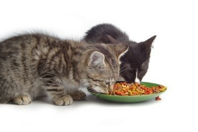 As Kittens Begin To Arrive At Our Shelter We Are In Need Of Dry Cat Kitten Food On A Daily Basis We Use About 125l With Images Best Cat Food