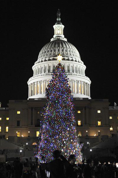 The World S Brightest Stars Top 10 Christmas Tree Must Sees White House Christmas Tree Christmas In America Christmas Tree Tops