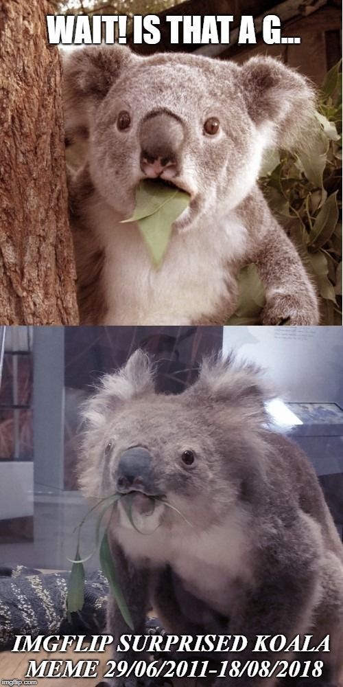 Pin on Memes, jokes, and funny images. Mainly made by me ...  Funny Koala Memes