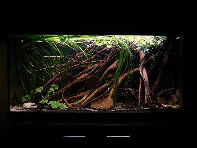 50 Biotope Aquascape Ideas Aquascape Biotope Aquarium Aquarium