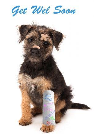 Beterschapskaart Hond Border Terrier Pup Met Gebroken