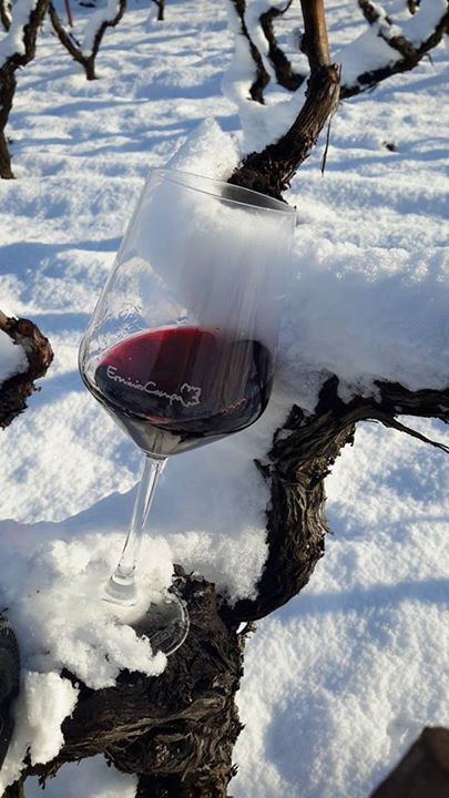 #apulianwine #primitivomanduria #vinopugliese #erminiocampa #shoponline su www.italyfoodwine.it