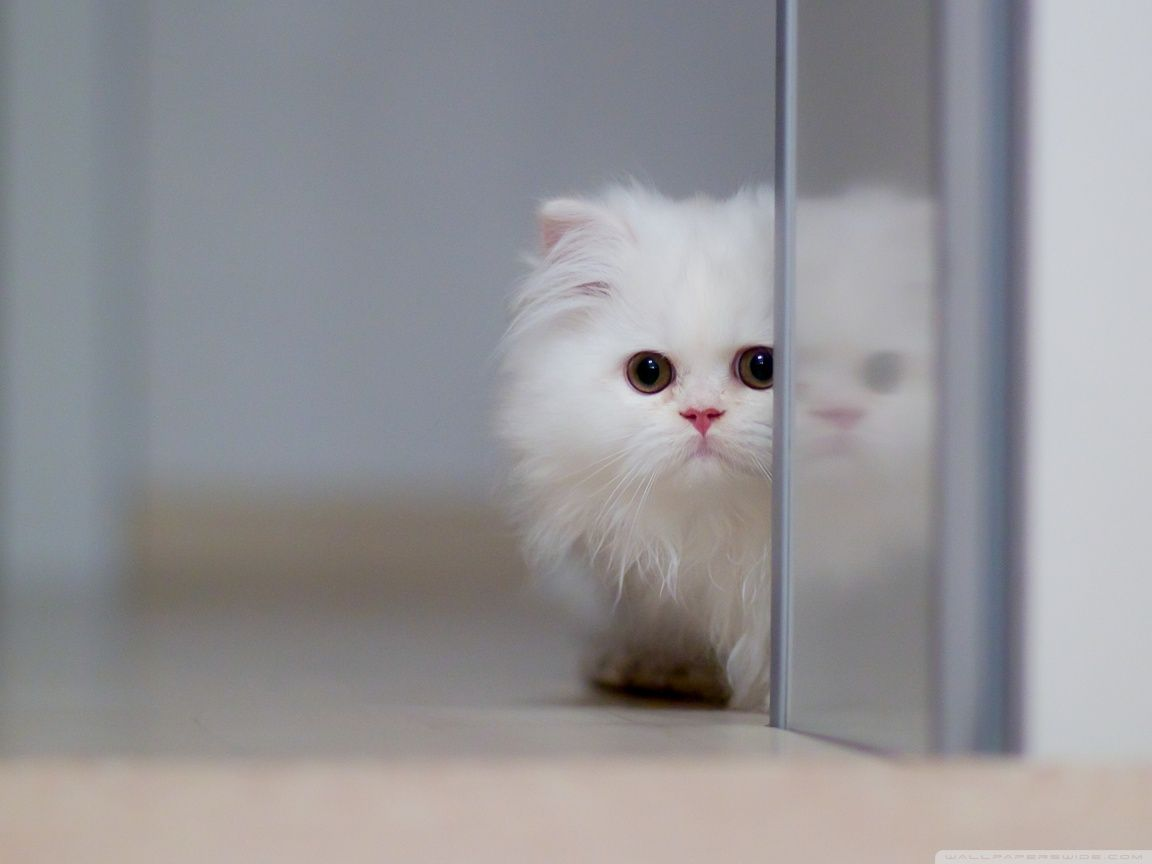 Moving Cat Screensaver White Cat Screensaver 360x640 Wallpaper360x640 Wallpaper Screensaver Cute Baby Animals Beautiful Cats Cats