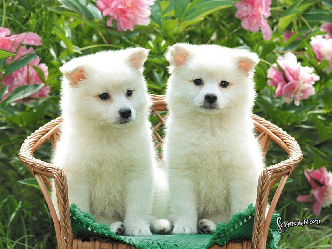 Cute dogs wallpapers dog puppy desktop wallpapers hd