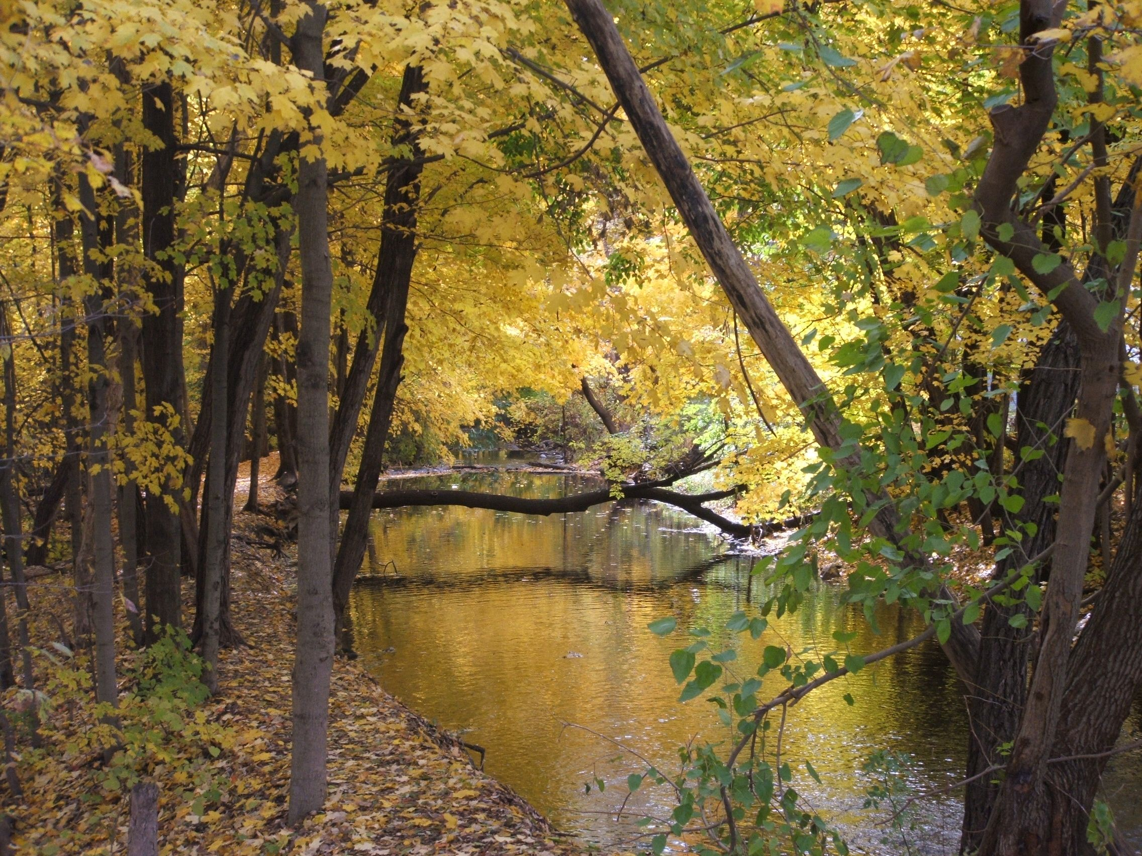 http://yfrog.com/5nn9rmj a look at the huron river from farr street in commerce michigan