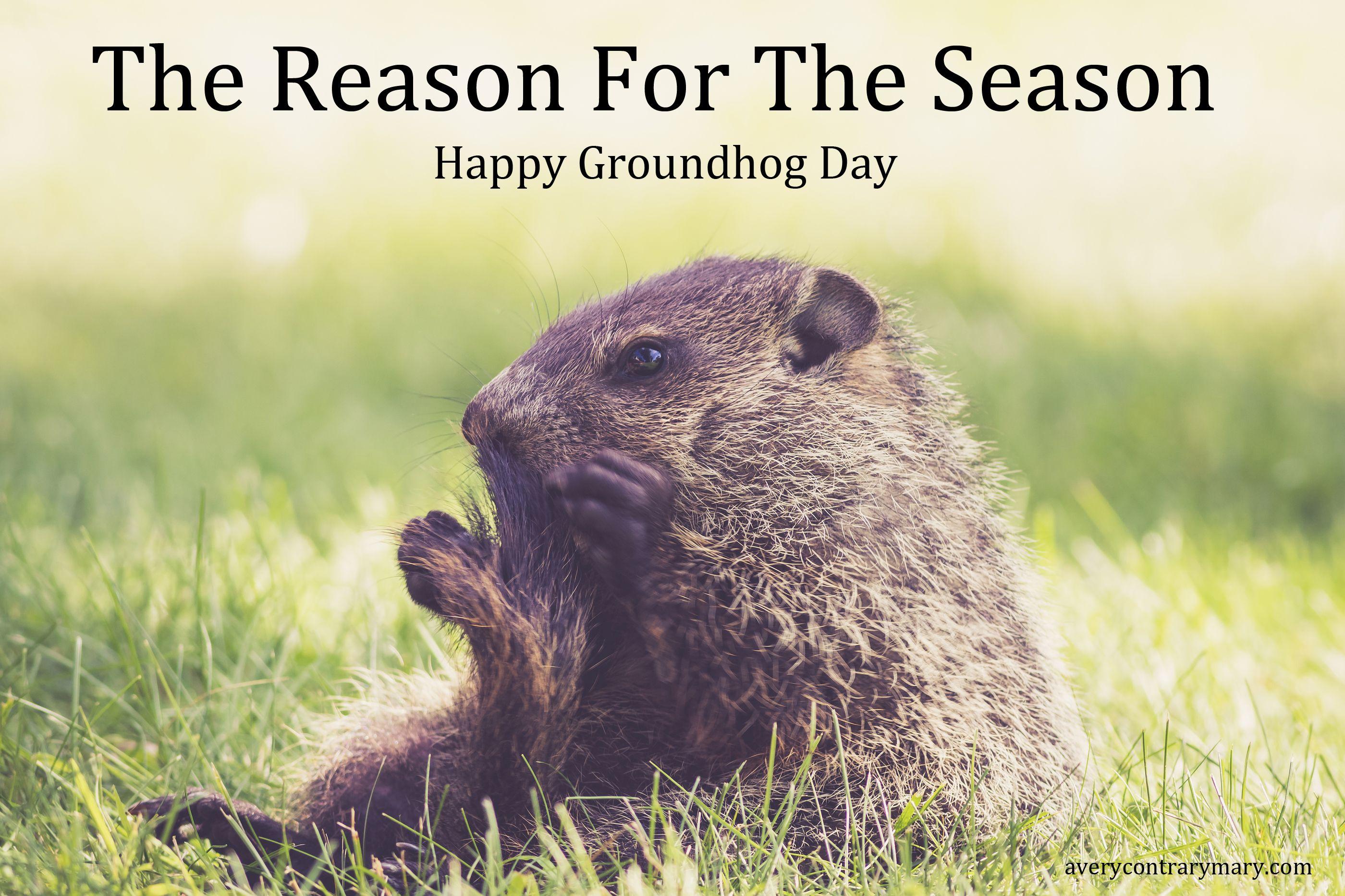 Stop the war on Groundhog Day.   Groundhog day, Groundhog ...