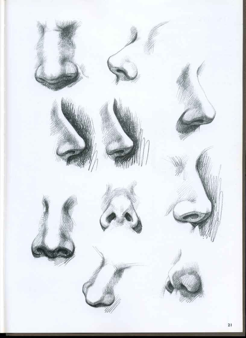 Drawing Noses On Pinterest How To Draw