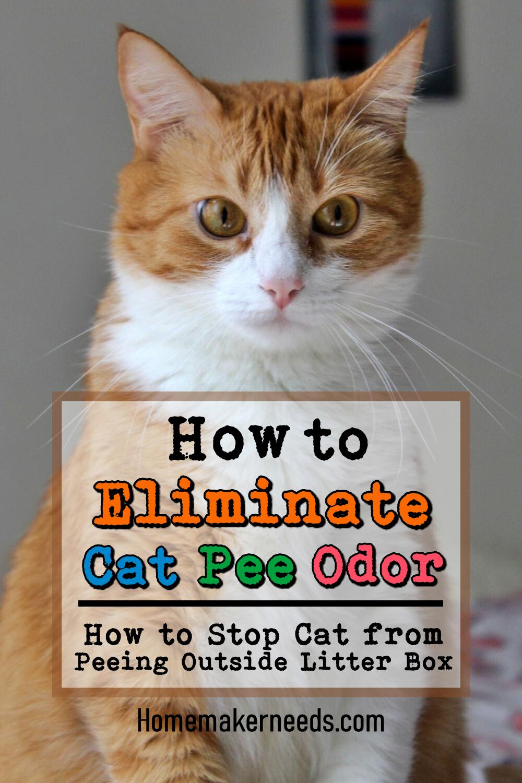 Cat Smell Urine
