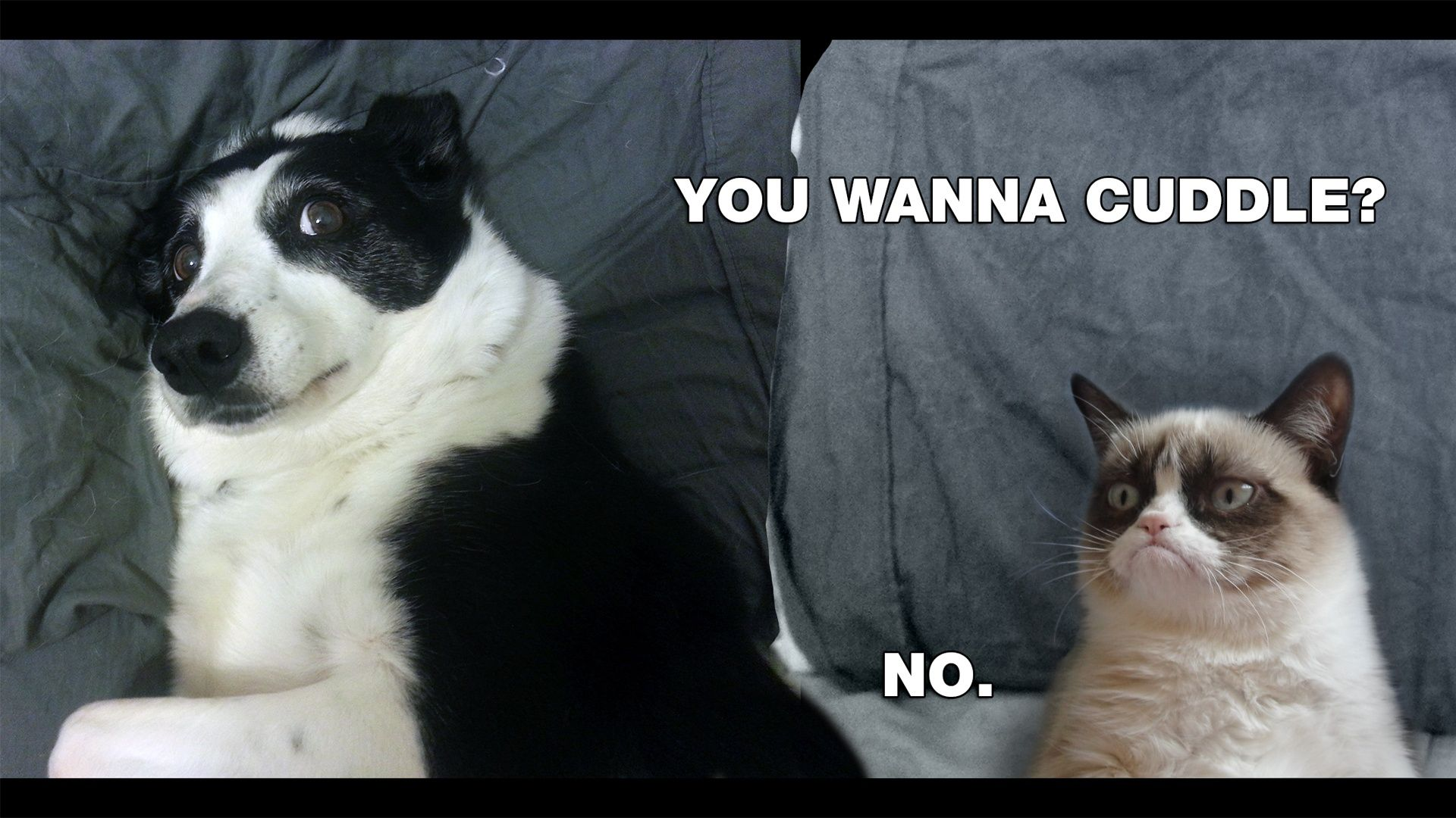 Forced update (With images) Grumpy cat, Cute cats photos
