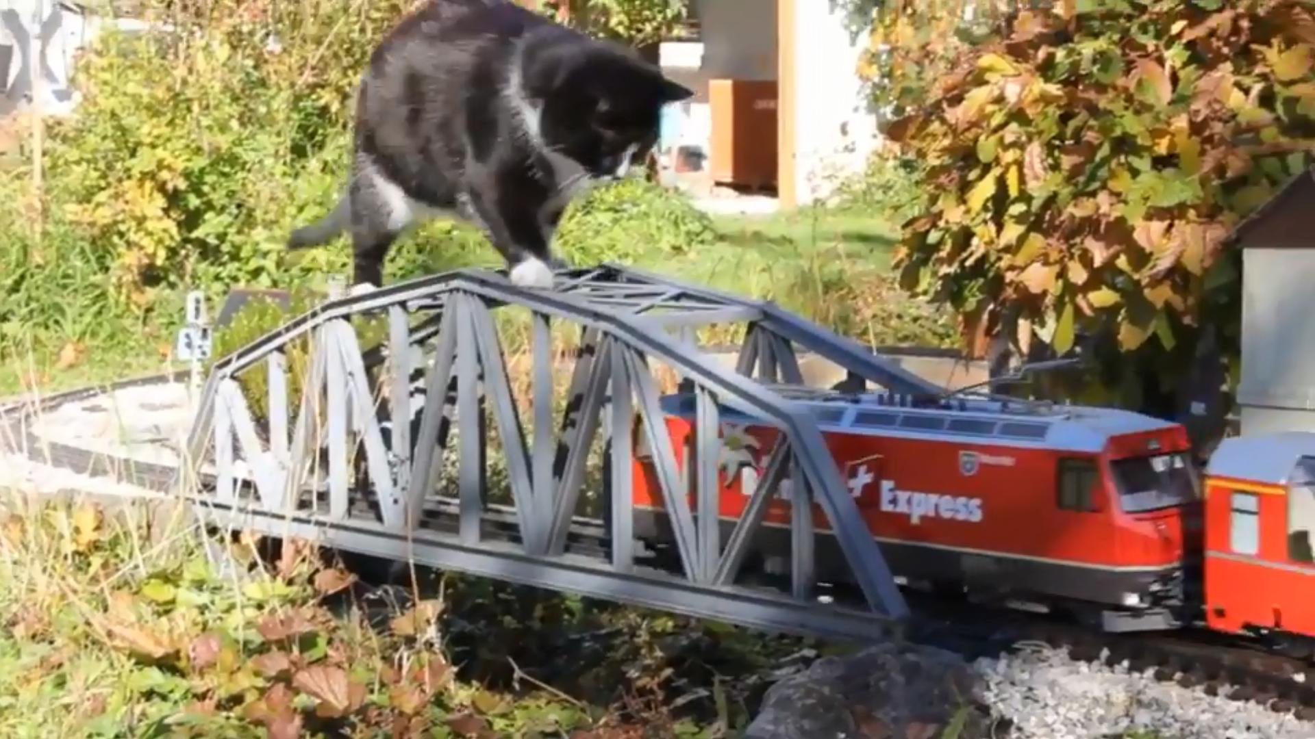 Gゲージ ねこやん 庭園鉄道 Neko Cat スイス 氷河急行 庭園鉄道 猫 ねこ