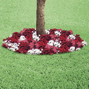 Sweet William Floral Ring Pre Seeded Floral Ring Spruces