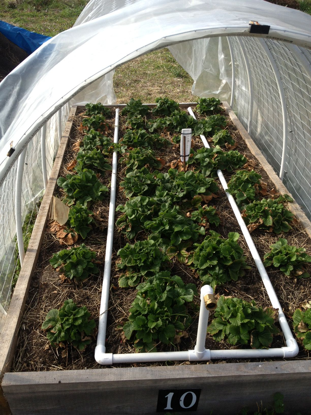 This homemade irrigation system uses inch pvc pipe