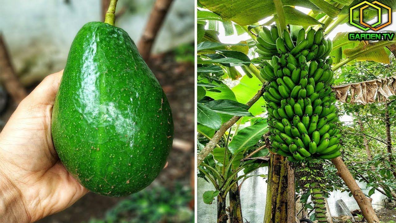 Un sencillo truco har que tus plantas den frutos como locas jardineria jardiner a plantas - Como plantar arboles frutales ...