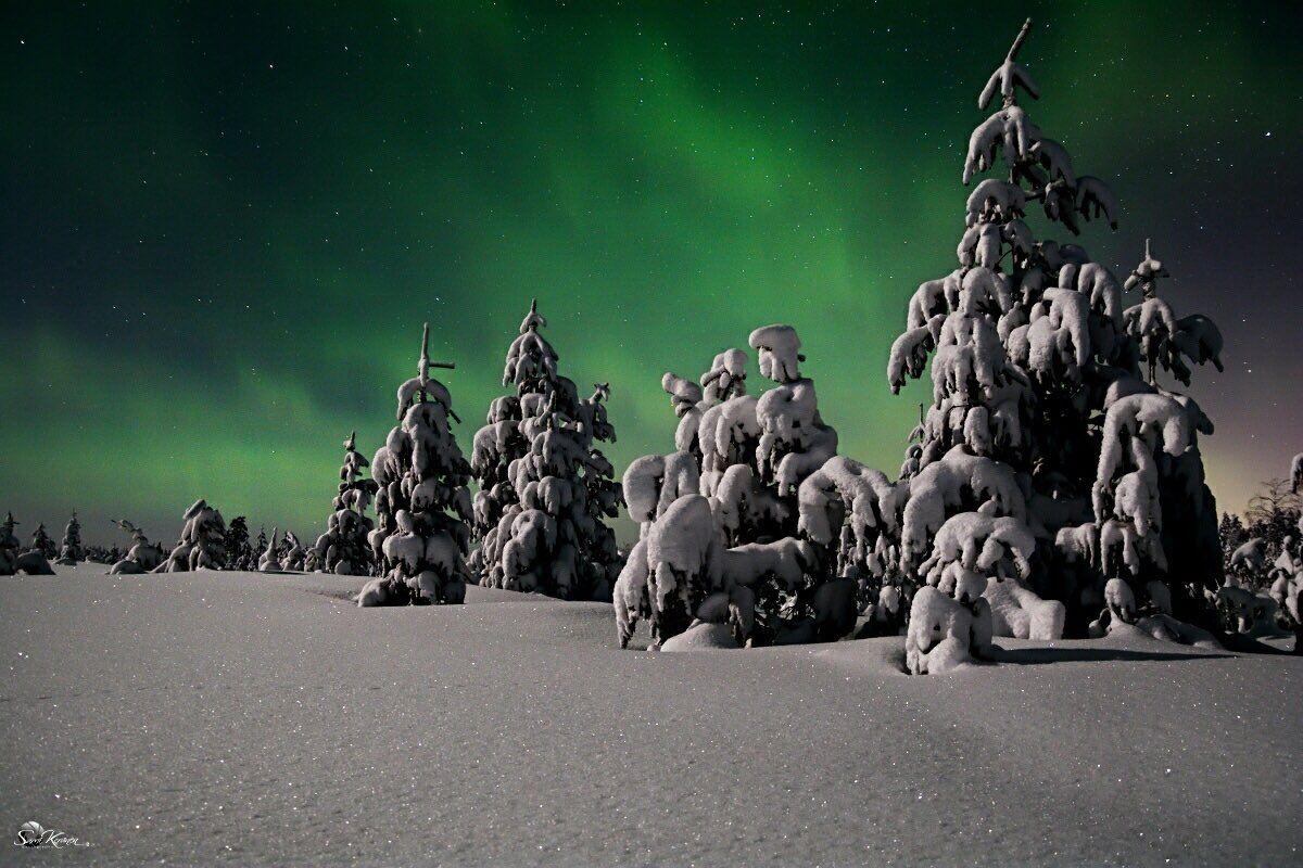 Öinen metsä 🌌🌲❄️🌲❄️🌲🌌 Night forest #Rovaniemi #Lapland   photo by 📸Sami Keränen - Satu Karlin (@KarlinSatu) | Twitter