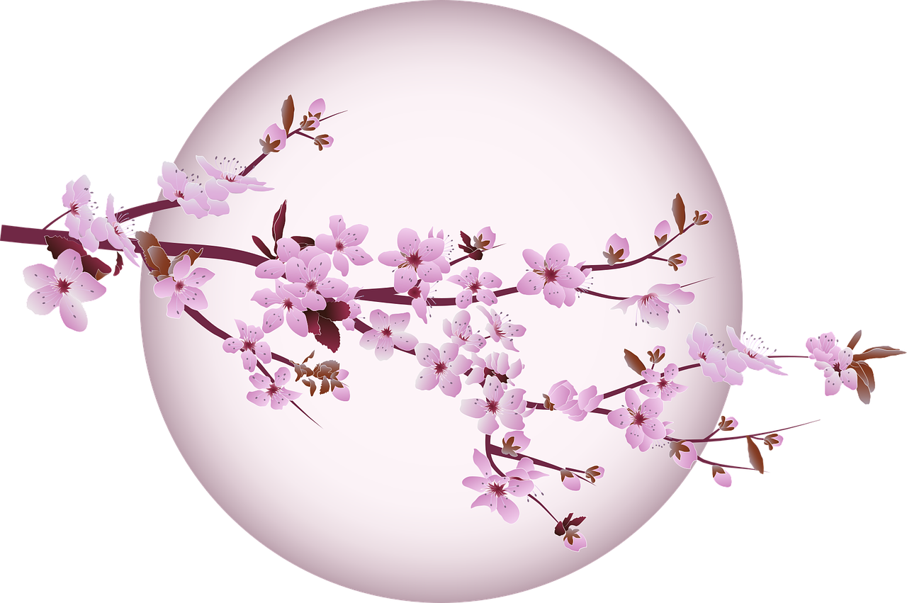 Free Image On Pixabay Cherry Blossom Cherry Tree Cherry Blossom Images Cherry Blossom Blossom Trees