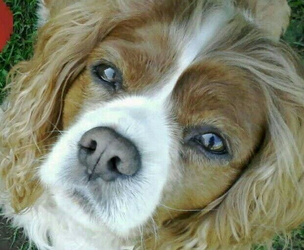 Beautiful Bailey
