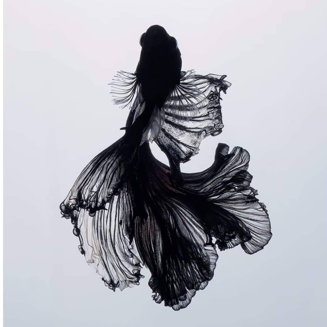 Thai Photographer Takes Unique Stunning Photos Of Fish Playjunkie Betta Fish Tattoo Fish Sketch Photos Of Fish