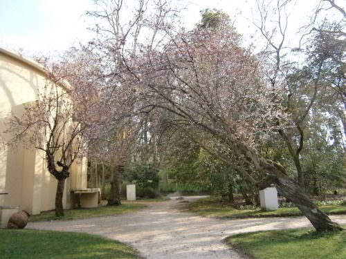 Parque Dom Carlos I, Caldas da Rainha