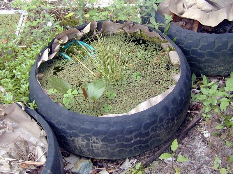 Estanque en llanta reciclada llantas exterior for Estanque koi pequeno
