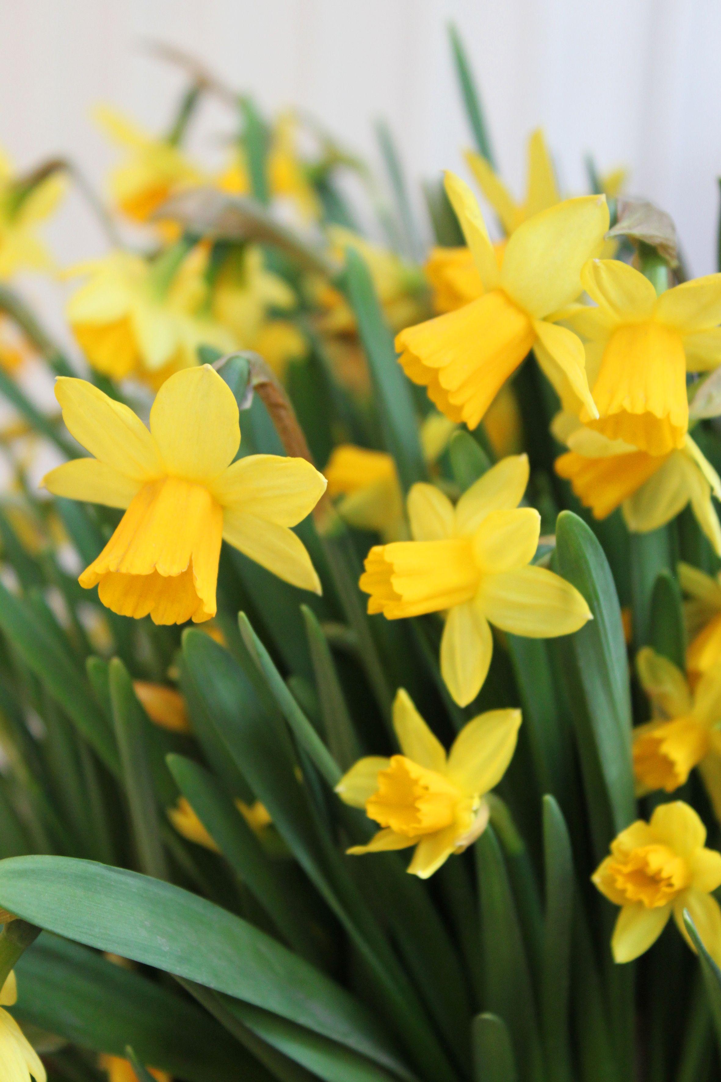 Mafka & Alakoski wishes Happy Easter!  Mafka & Alakoski toivottaa hyvää pääsiäistä!