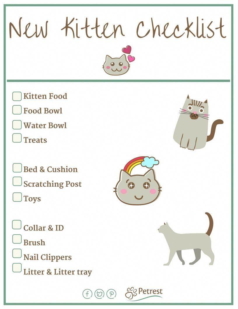 New Kitten Checklist Petrest Kitten Checklist Kitten Care Cat Care