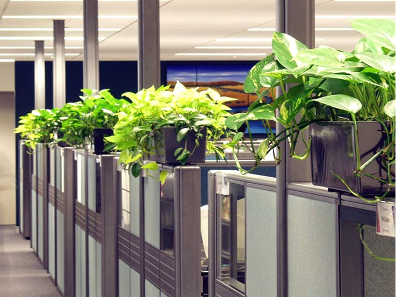 plants by office plant hire