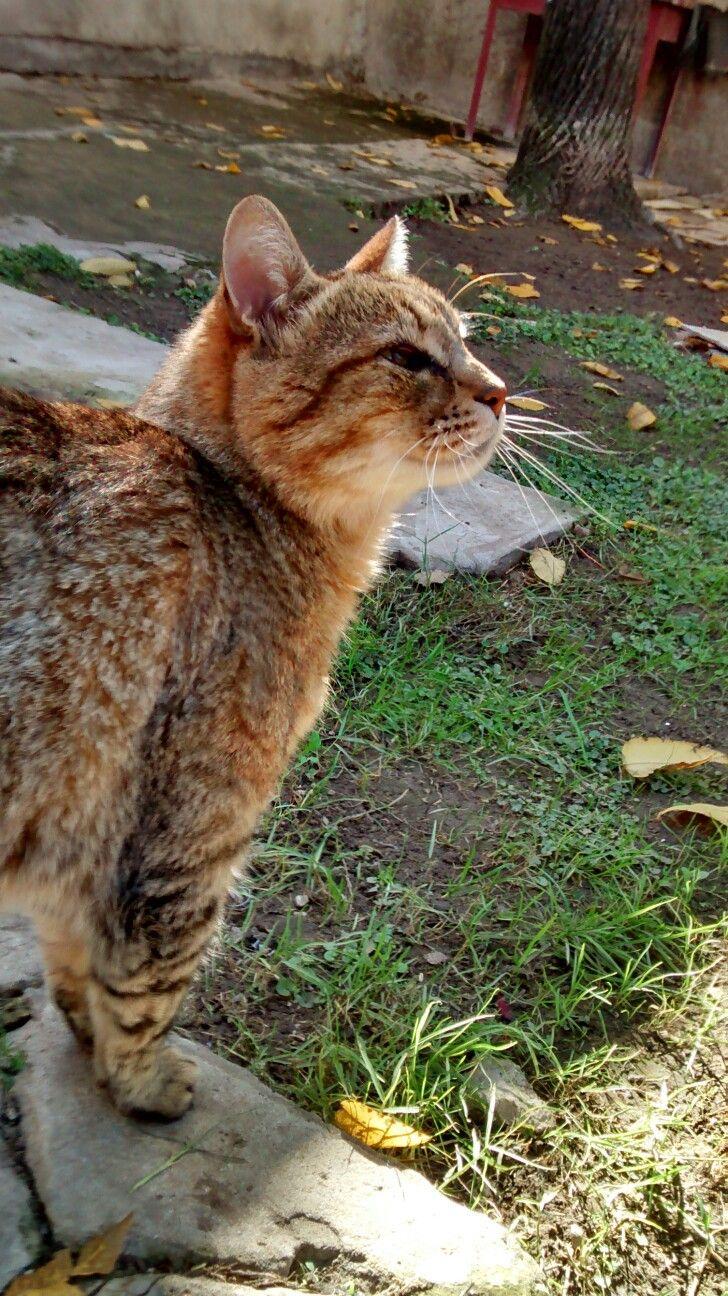 Gato 3 Cats, Animals