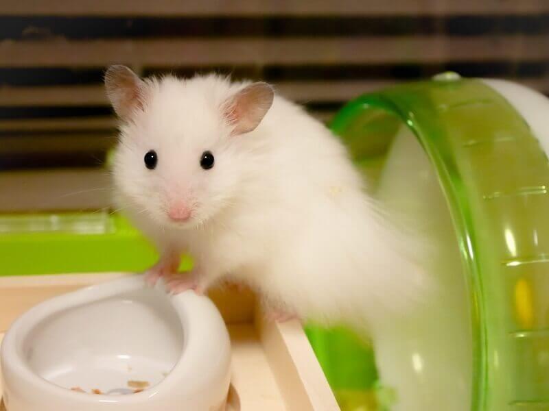 ボード Hamsters のピン