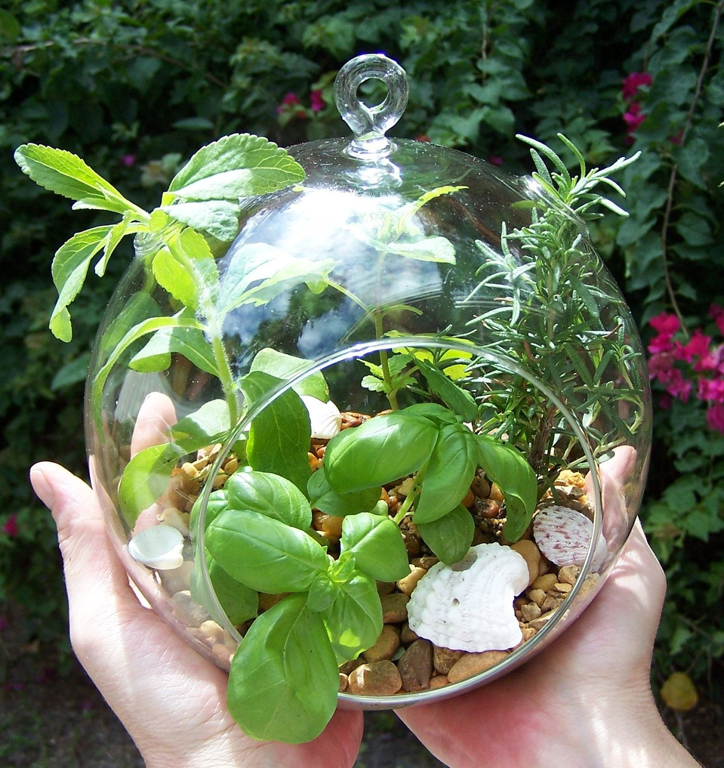 Herb Garden Terrarium Kit Hanging Glass ORB Plants DIY Project.