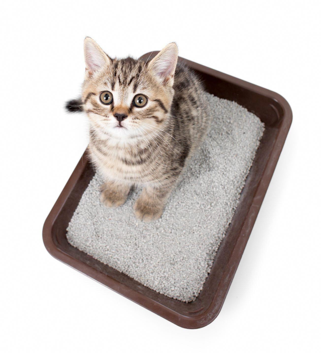 kitten in a litter box Cat care, Litter box, Pet hacks