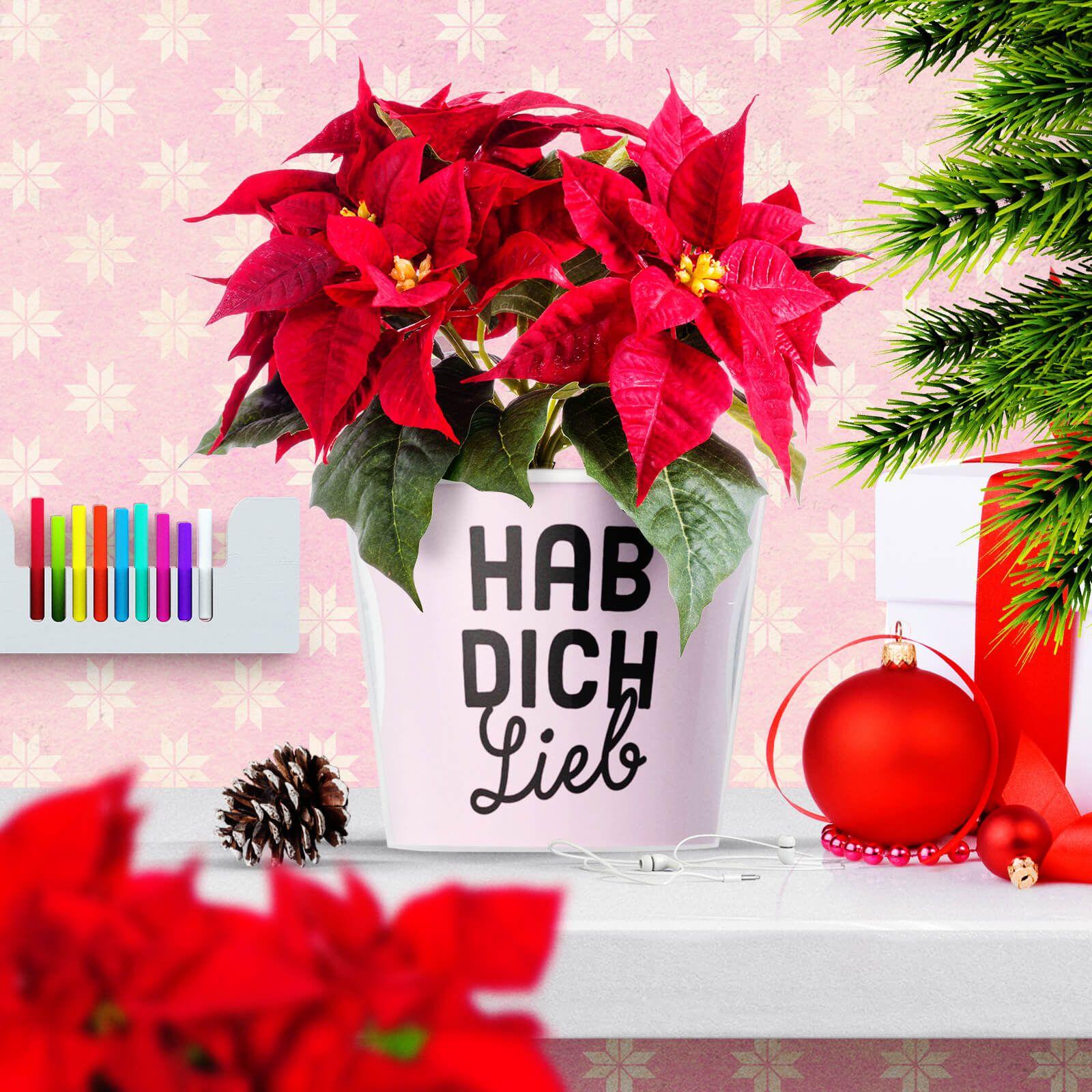 geschenke f r opa und oma zu weihnachten hab dich lieb weihnachtsw nsche geschenke und