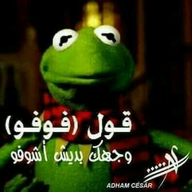 Pin By Maged Rayan On ضفدع كامل Funny Picture Quotes Funny Dude Funny Comments