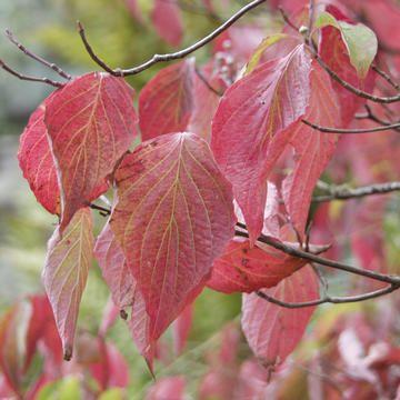 Farbenrausch im Herbst